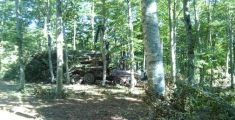 Autocargador transitando por un hayedo sin apenas pendiente mientras desembosca biomasa de haya