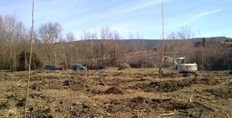 Detalle de plantación a raíz profunda en choperas. Romanzado 2012