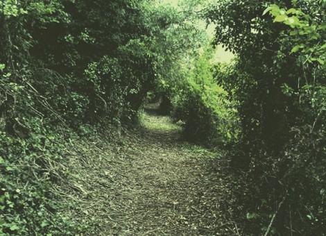 Limpieza de senderos en Monreal. 2012