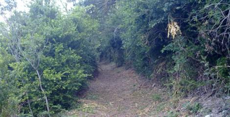 Limpieza de senderos locales. Urrául Bajo 2013